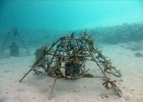 2015_08_20_Korallenzucht_Coral-Frames