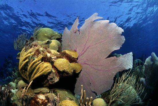 2015_06_30_Klimawandel_Coral_Bermuda_c_A_Venn