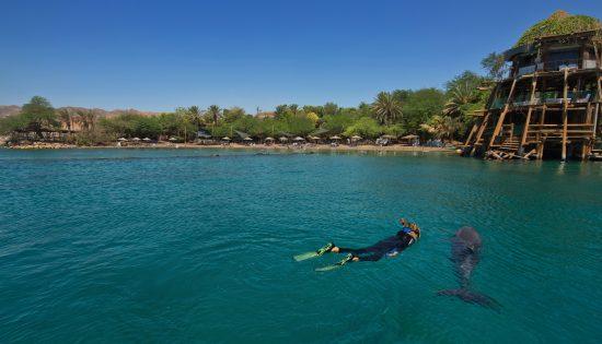 ריף הדולפינים, אילת
