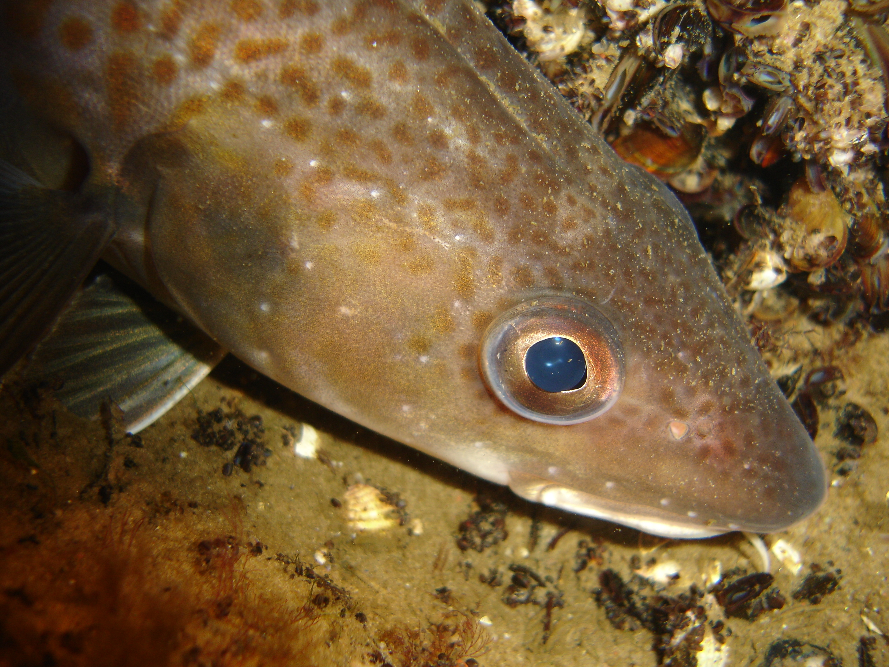 Overfishing causes collapse of cod fisheries in Baltic Sea ...