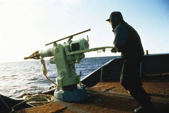 Whaling13_c_Mark Votier