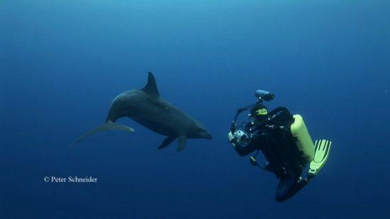rebreather-dolph01 Kopie