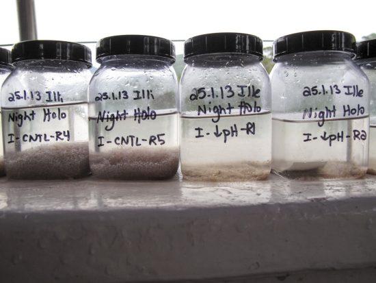 20130126_coral_zooplankton_samples_JoySmith_Bildgröße ändern