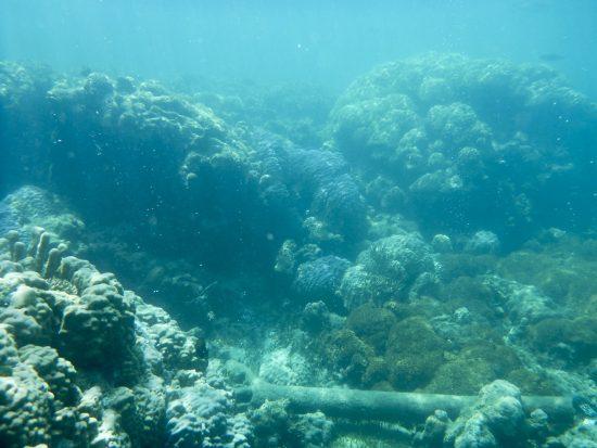 20140327_coral_zooplankton_affected_reef_JoySmith_Bildgröße ändern