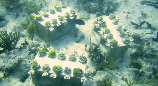 2016_11_16_New coral research_1