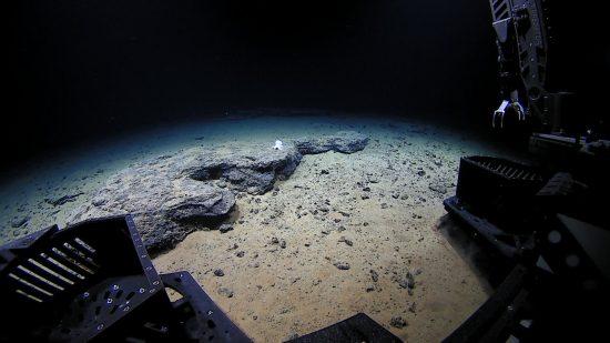 "Der US-amerikanische Tauchroboter Deep Discovery nähert sich dem Tiefseekraken ""Casper"" in 4290 Metern Tiefe an der Necker Ridge, Hawaii.English:The ROV Deep Discoverer approaches the unknown octopod ""Casper"" at 4,290 meters depth, Necker Ridge, Hawaii."