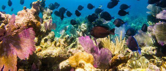 Bonaire tauchen 10