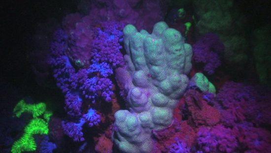 2017_02_04_Zauberwelt KorallenriffFuerTaucher_2