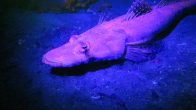 2017_02_04_Zauberwelt KorallenriffFuerTaucher_4