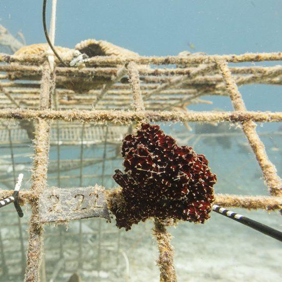 2017_02_26_Biorock Projekt Curacao_pics_04