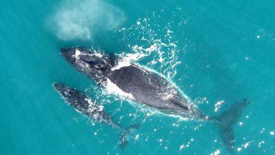 2017_04_27_Whispering whales_138860_Fredrik_Christiansen_web