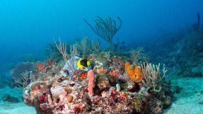 NOAA blog 4 (1)