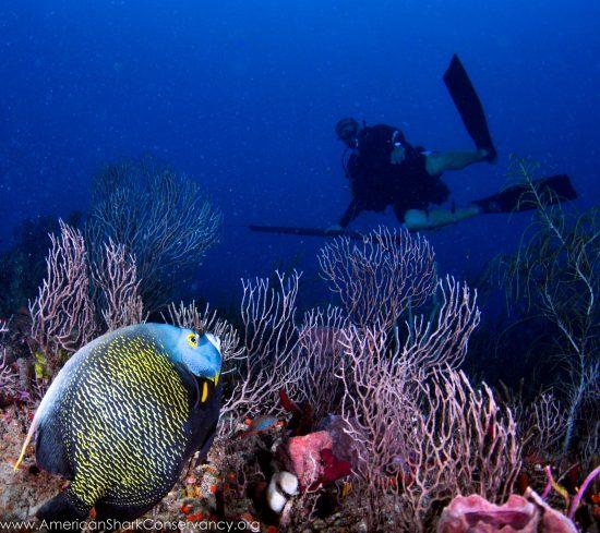 NOAA blog 4 (2)