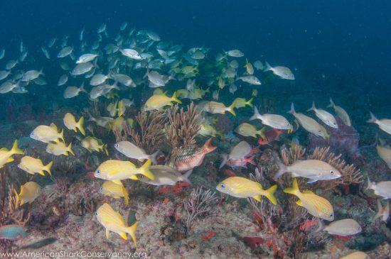 NOAA blog 4 (3)