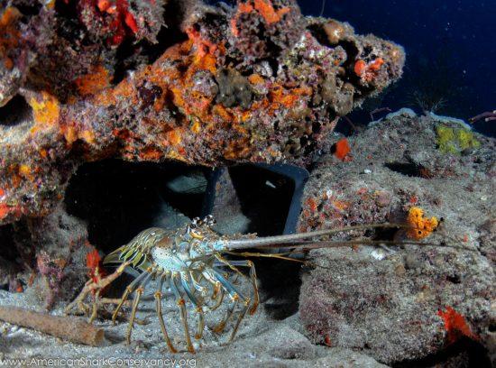 NOAA blog 4 (4)