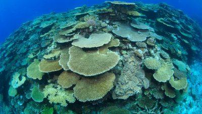 2017_05_25_Korallenlarven_01