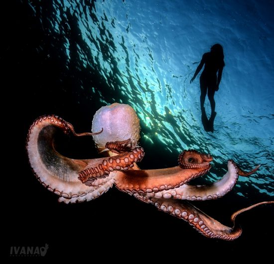 Octopus 4-photo by Ivana O.K. (Large)