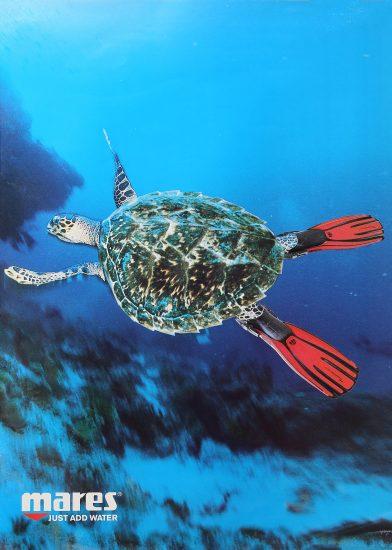 Poster tartaruga