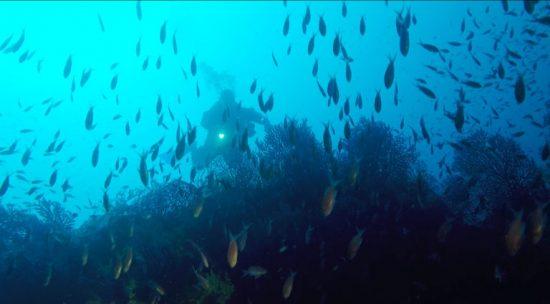 A hidden diver