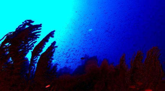 Light on the gorgonians