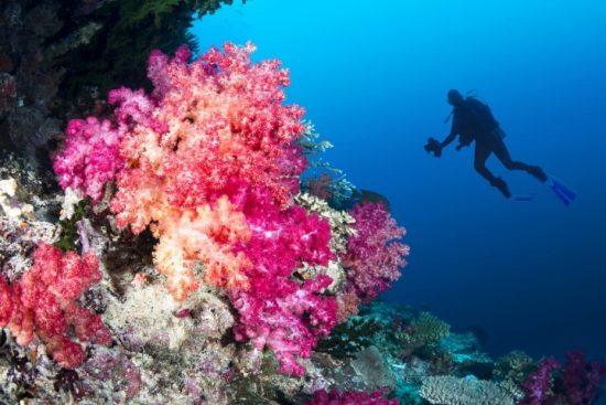 A coral reef in Fiji