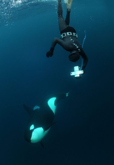 Pierre & orca - CREDIT Orca Norway (Large)