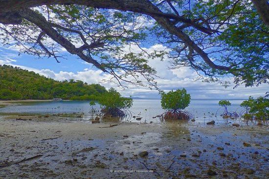 Rainbow Reef - Taveuni - Fiji