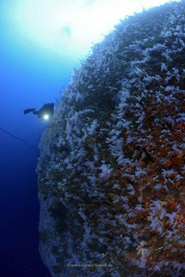 White Wall, Rainbow Reef, Taveuni, Fiji
