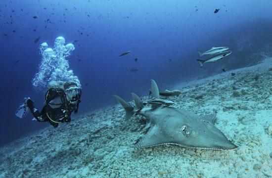 02Guitar Sharks Photo by Janez Kranjc