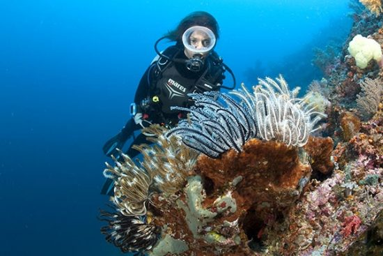 Scuba diver and crinoid or feather star attached to a sponge, Halmahera, Moluccas Sea, Indonesia, Pacific Ocean