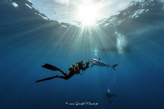 Taucher mit Blauhai - Azoren
