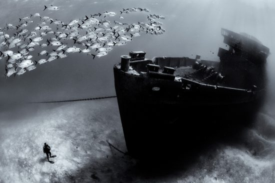 A school of horse-eye jacks (Caranx latus) swim over the bow of the USS Kittiwake wreck, while diver (Colin Bristow) looks on. Seven Mile Beach, Grand Cayman, Cayman Islands, British West Indies. Caribbean Sea.